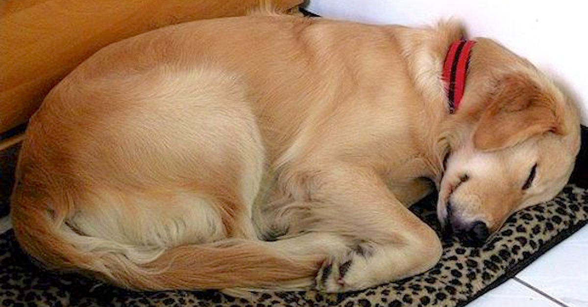 http://littlethings.com/tired-dog-note/?utm_source=hunnam&utm_medium=Facebook&utm_campaign=dog